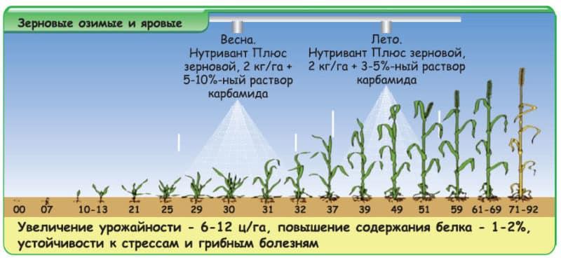 Как и для чего применять карбамид после цветения пшеницы