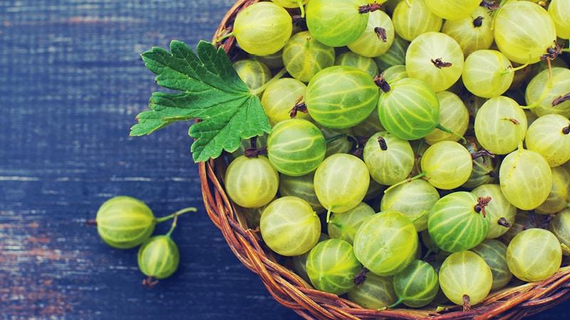 Лечебные свойства и противопоказания ягод и листьев крыжовника