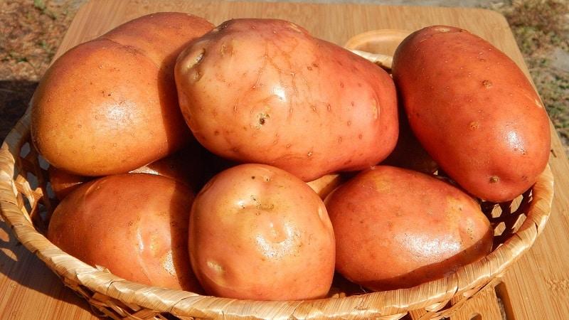 Определяем вес урожая на глаз: сколько картофелин в 1 кг и как примерно оценить массу