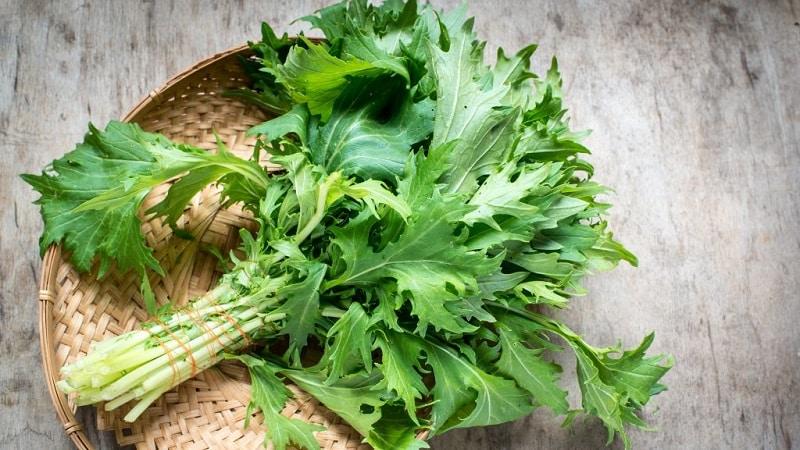 Правила посева и особенности выращивания японской капусты (мизуны)