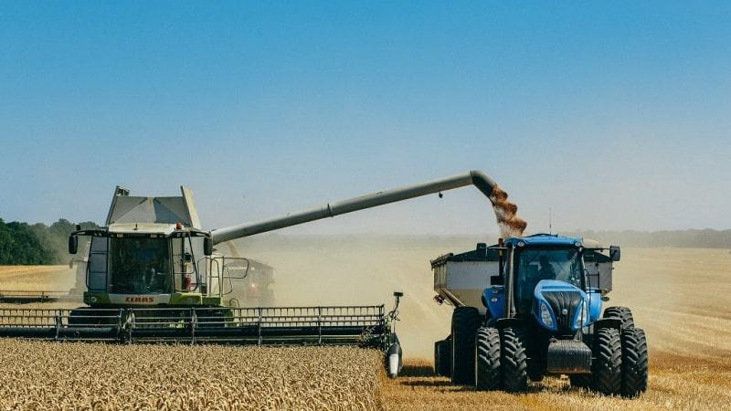 Причины возникновения ржавчины пшеницы и методы борьбы с ней