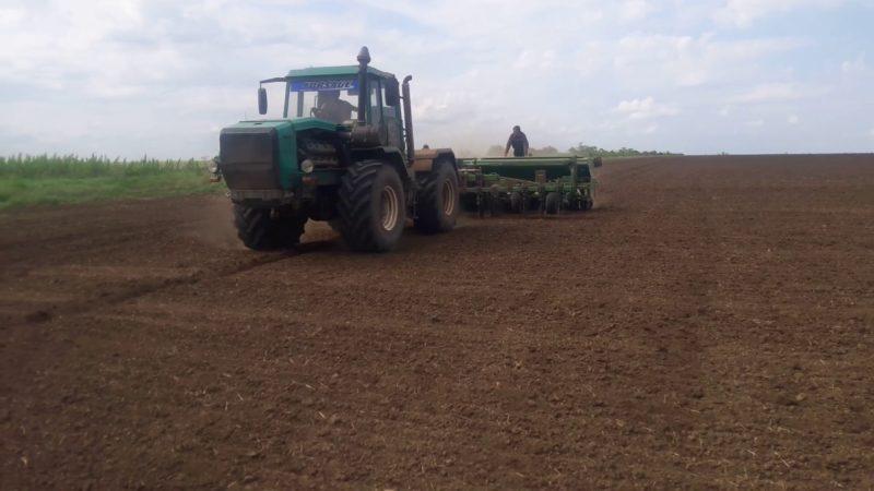 Сроки и нормы высева проса при рядовом способе посева и дальнейший уход за посадками