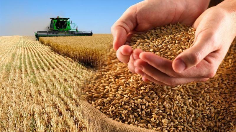 Сроки, правила и способы хранения пшеницы в промышленных масштабах и домашних условиях