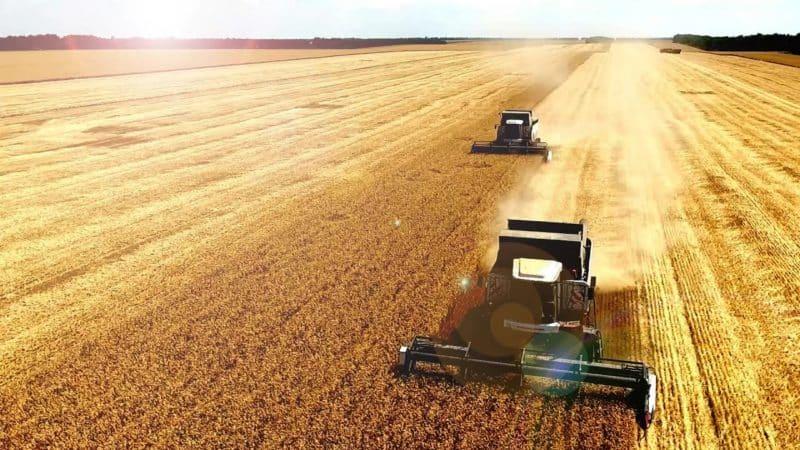 Как и когда происходит уборка пшеницы: сроки, способы и дальнейшее хранение