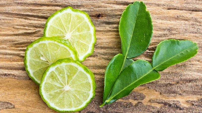 Чем полезны листья кафрского лайма и как их применять в кулинарии и ароматерапии