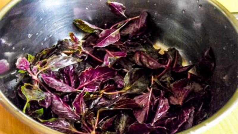 Фиолетовый базилик - польза и вред