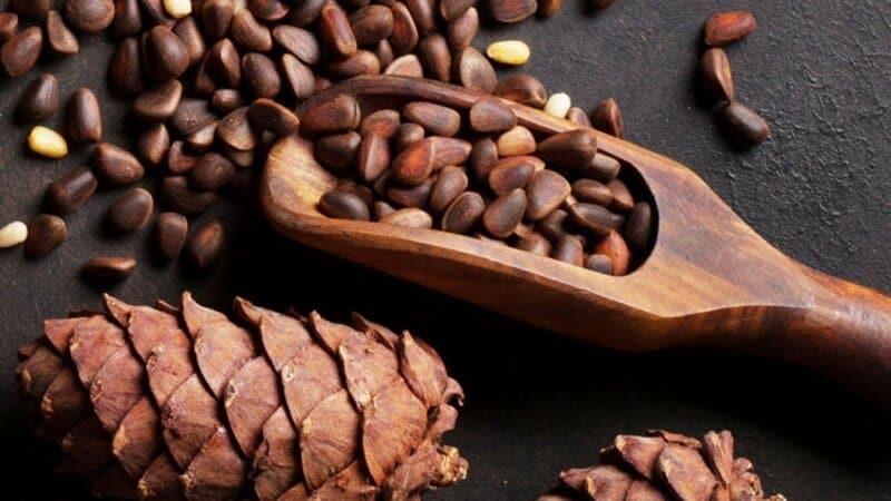 Чем полезны кедровые орехи для женщин