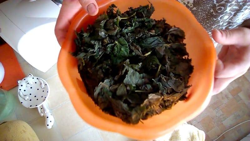 Как ферментировать листья малины в домашних условиях
