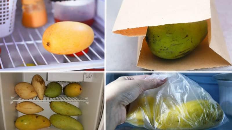 Как хранить манго в домашних условиях, чтобы оно не испортилось