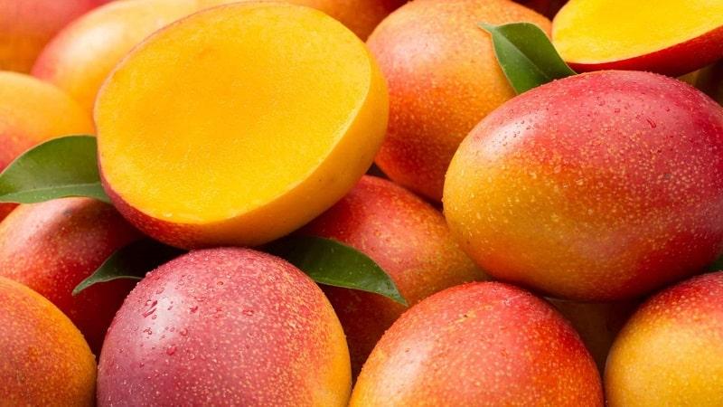 Как дозреть манго в домашних условиях: определение степени спелости,  способы ускорения созревания, правильное хранение