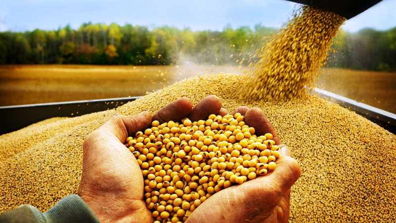 Урожайность сои на орошении