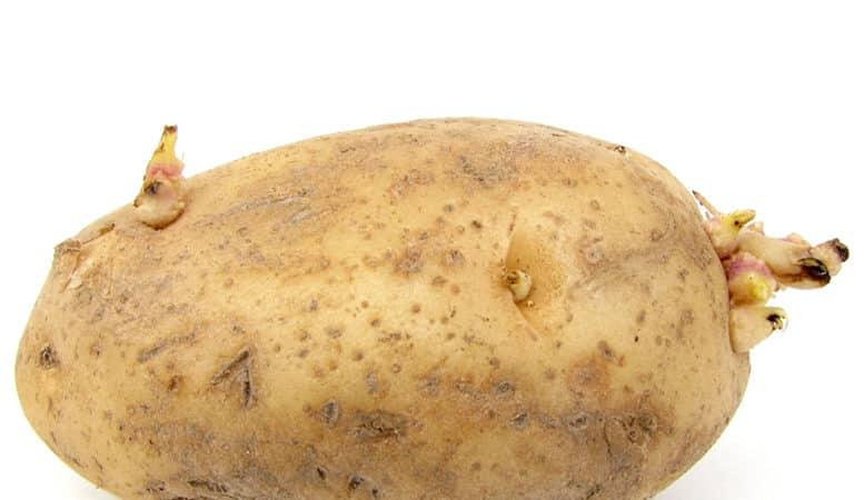 Видоизменение побега является- 1)клубень картофеля 2)корнеплод моркови 3)луковица тюльпана 4)клубень георгина 5)корневище ириса 6)усики гороха ПОМОГИТЕ!!! ВОПРОС ЖИЗНИ И СМЕРТИ!!!!!!!!!!!