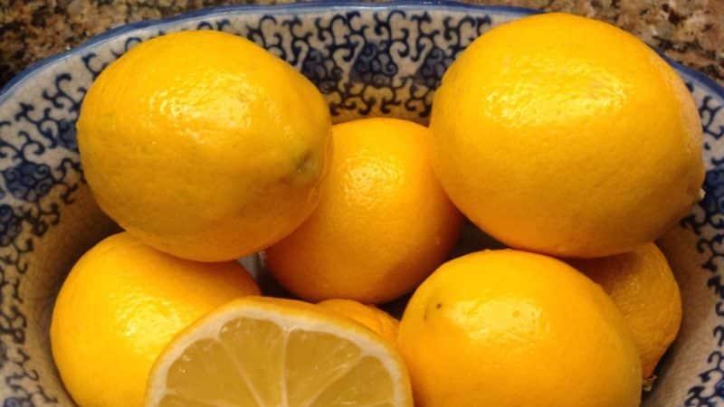 Оранжевый сорт лимона Мейера: описание, преимущества и недостатки, особенности выращивания