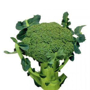 Высокоурожайный поздний гибрид капусты брокколи Маратон f1