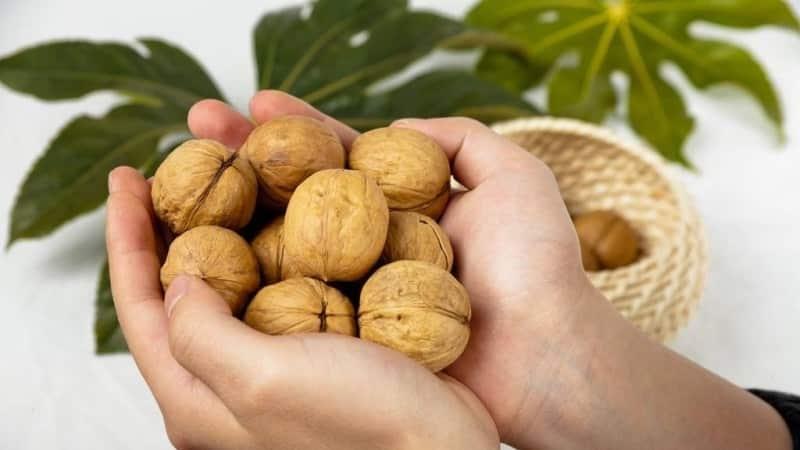 Польза и вред грецкого ореха для женщин