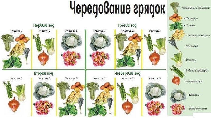 После чего можно и нельзя сажать капусту на следующий год