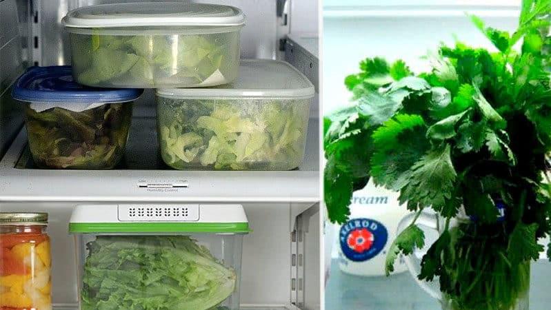 Как правильно хранить базилик в холодильнике в свежем виде