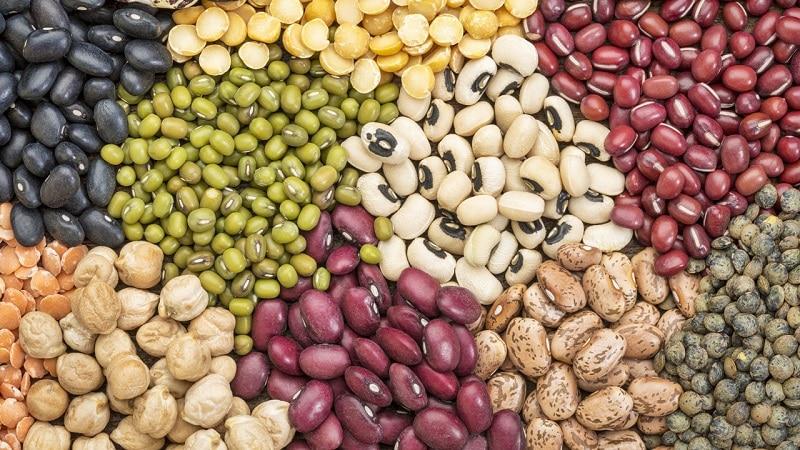Разновидности и сорта бобов: конские (садовые), декоративные, крупноплодные овощные, кормовые