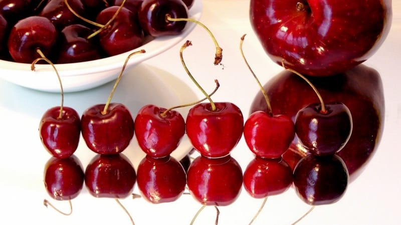 Самые сладкие сорта вишни для средней полосы России