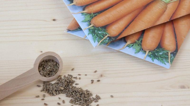 Какие бывают семена моркови, как их правильно выбирать, сажать и выращивать самостоятельно