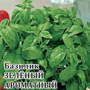 Сорт базилика {amp}quot;Зеленый ароматный{amp}quot;: выращивание из семян, характеристики и описание