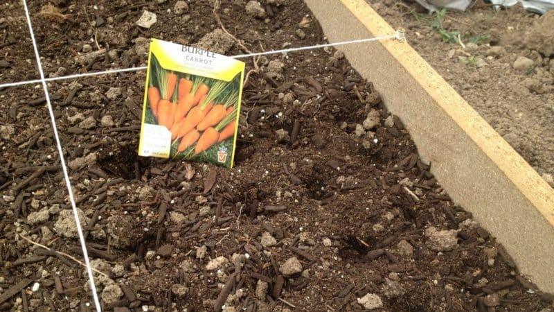 Как подготовить грядку осенью для посадки моркови