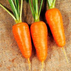 Высокоурожайный гибрид моркови Болтекс с отменным вкусом