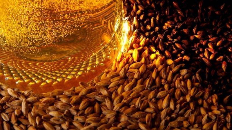 Характеристика пивоваренного ячменя