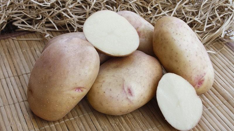 Почему при беременности тянет на картошку и можно ли ее есть