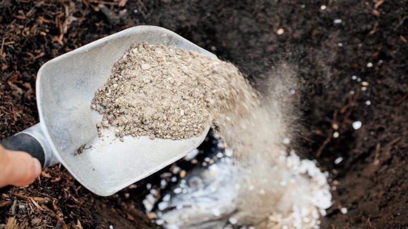 Плюсы и минусы посадки картофеля в гребни