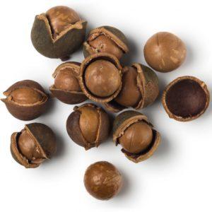 Скорлупа ореха макадамия - полезные свойства и применение