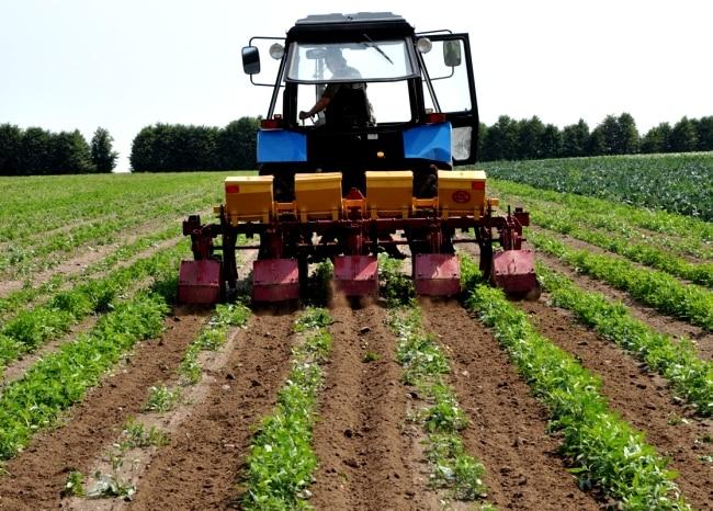 Машины для возделывания картофеля - особенности сельхозтехники