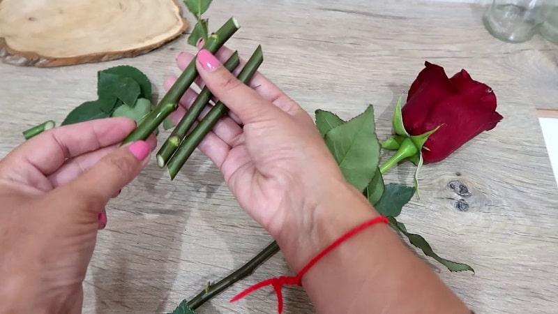 Черенкование роз в стаканчиках в домашних условиях
