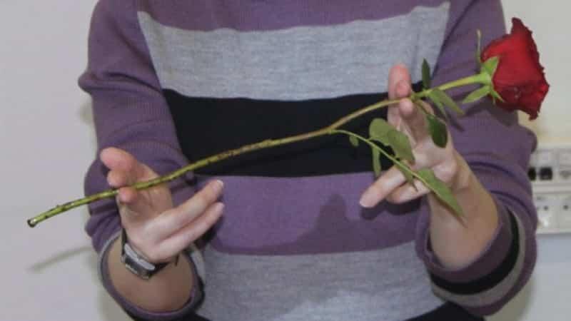 Инструкция для начинающих цветоводов: как укоренить розу из букета в домашних условиях
