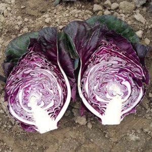 """Чем хороша капуста """"Калибос"""", как её выращивать и куда применять"""