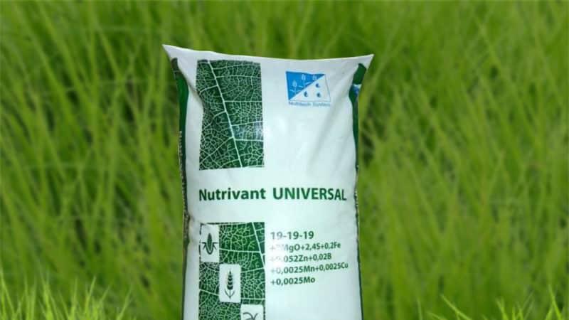 Правильная подкормка озимой пшеницы весной: удобрения и нормы их внесения