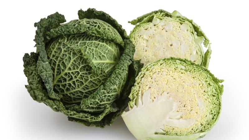 Польза и вред, особенности применения савойской капусты