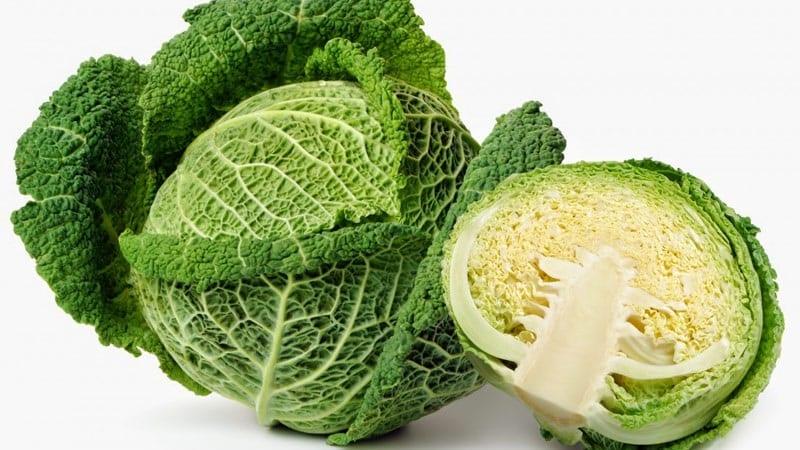 Посев и выращивание савойской капусты