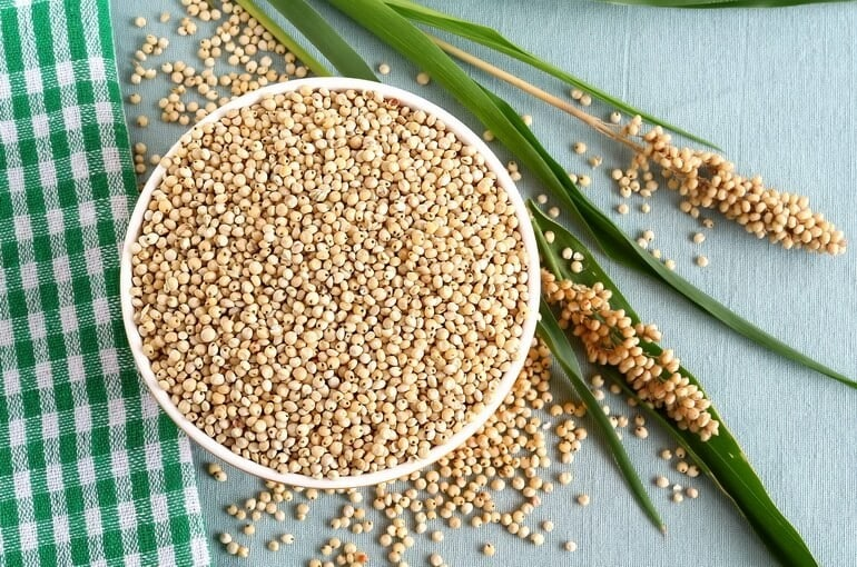 Что такое зерновое сорго, особенности его применения и выращивания