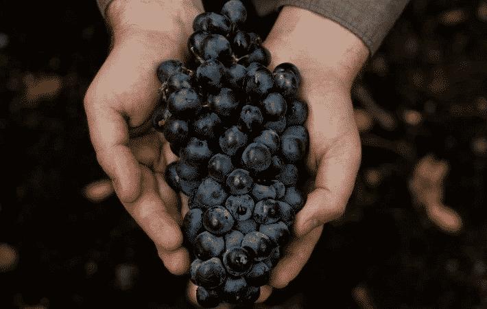 Уход за виноградом летом: необходимые работы на винограднике и советы опытных виноградарей