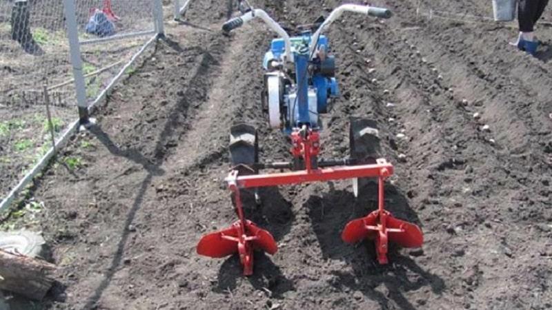 Как копать картофель мотоблоком