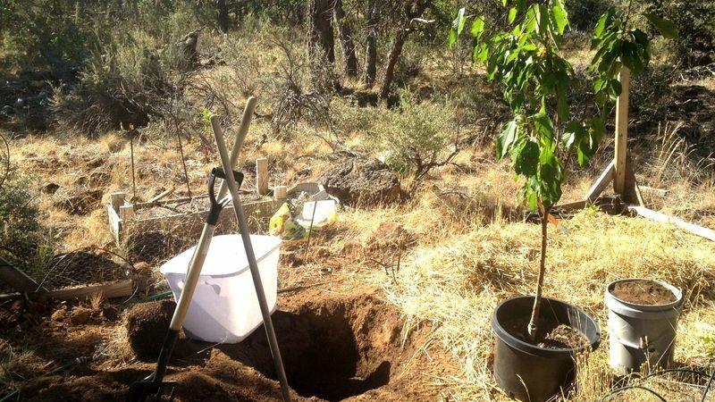 Можно ли в июле сажать вишню и как это правильно сделать: инструкция и советы бывалых садоводов