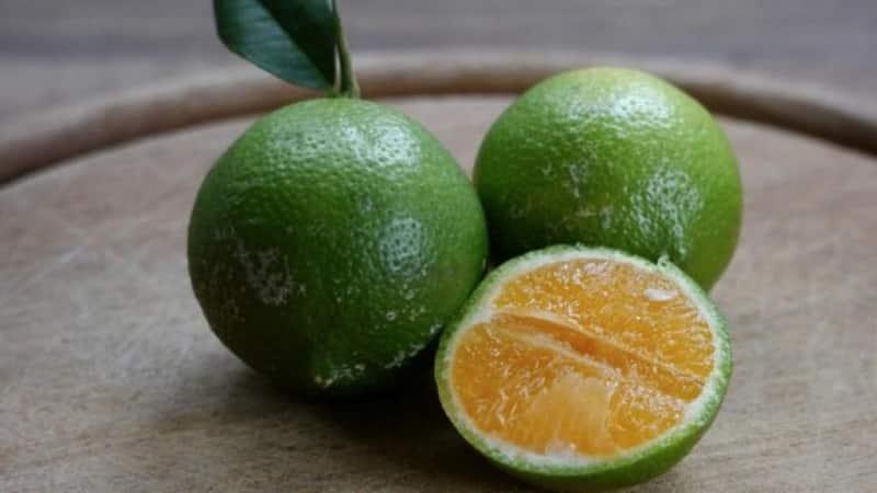 Как называется смесь апельсина и мандарина, и какие еще существуют гибриды цитрусовых
