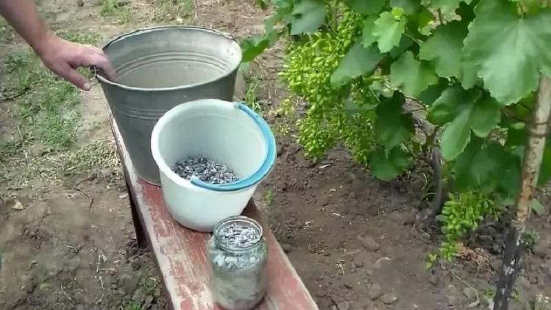 Чем полезна подкормка винограда золой летом и как правильно её вносить