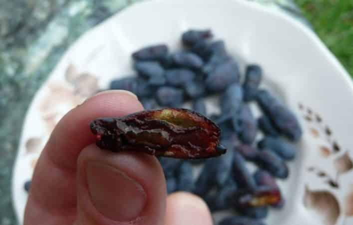 Какие червяки портят ягоды жимолости и как от них избавиться
