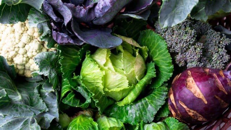 Выясним, есть ли в капусте крахмал и какова польза и вред крахмалистых овощей