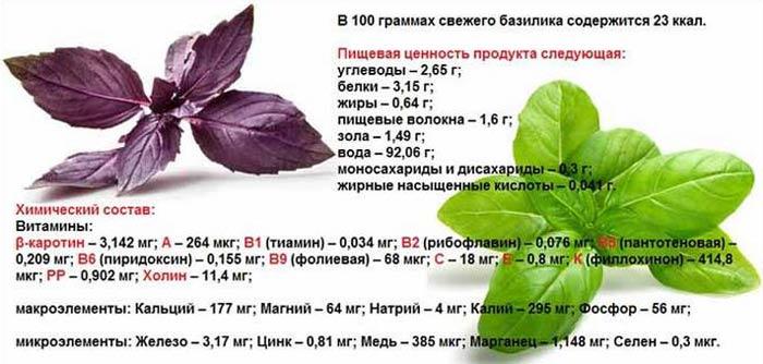Разница между зеленым и фиолетовым базиликом: польза и вред, свойства, сферы применения