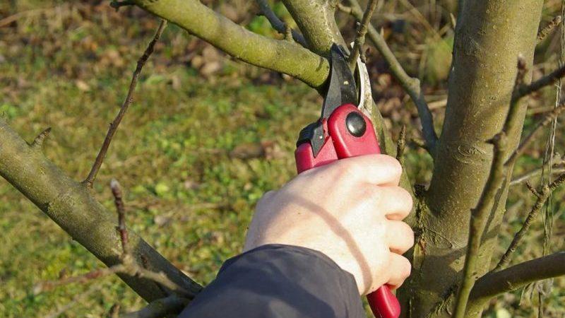 Пошаговая инструкция по обрезке яблонь весной для садоводов-новичков