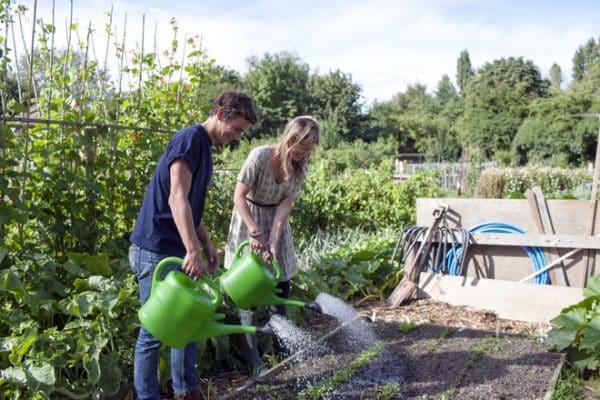 Инструкция по поливу моркови в августе в открытом грунте для начинающих огородников