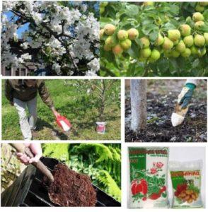 Пошаговое руководство по посадке яблони с закрытой корневой системой летом